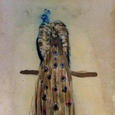 Arte: PAVO REAL. ACUARELA SOBRE PAPEL. FIRMADO PLA RUBIO (ALBERTO?). ESPAÑA. XIX-XX. Lote 100316211