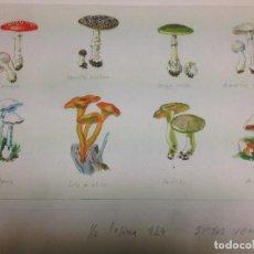 Arte: PAREJA DE ACUARELAS Y DIBUJOS DE SETAS, COMESTIBLES Y NO COMESTIBLES, ORIGINAL DE PIERRE MONNERAT. Lote 101361971