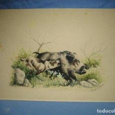 Arte: PRECIOSA ACUARELA CAZA CINEGETICA DE JABALÍ Y PERRO DE REALA. FIRMADA FERNANDO TY HERRERA. M 50X30 . Lote 105344055