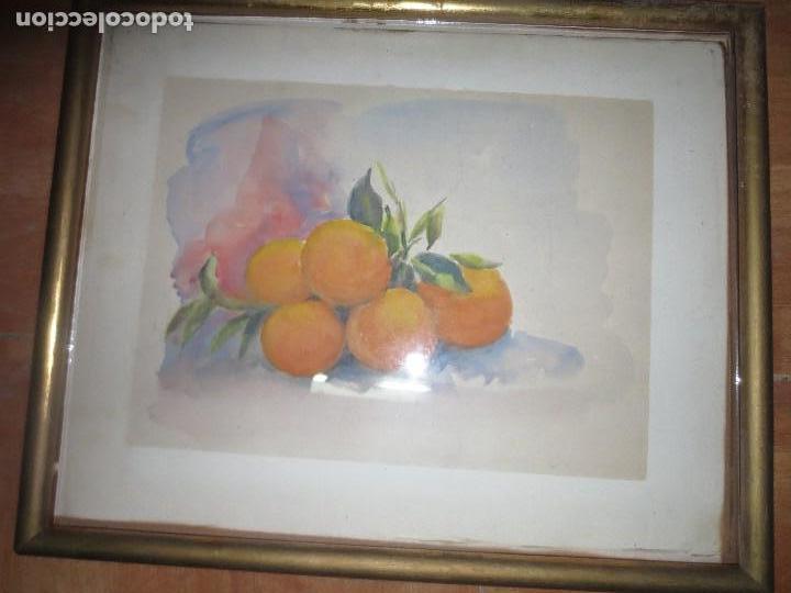 Arte: ANTIGUA ACUARELA ORIGINAL PINTURA VALENCIANA RACIMO DE NARANJAS - Foto 2 - 110968075