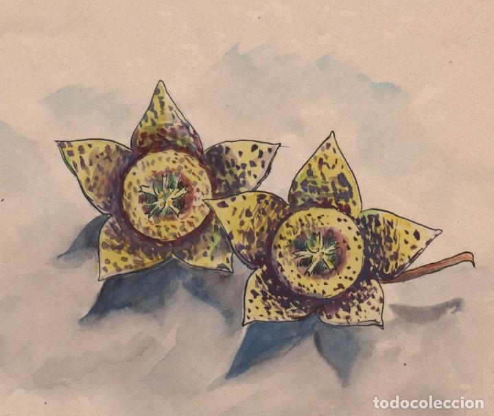 FLOR DE CACTUS.DIBUJO /ACUARELA SOBRE PAPEL DE ENRIC C RICART NIN. 1931 (Arte - Acuarelas - Contemporáneas siglo XX)