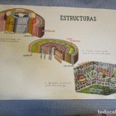 Arte: RARA Y CREEMOS UNICA AGUADA ACUARELA ' ESTRUCTURAS DICOTILEDONEAS ' BOTANICA 40*64CM + INFO. Lote 136230690