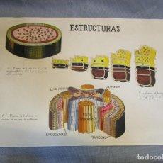 Arte: RARA Y CREEMOS UNICA AGUADA ACUARELA ' ESTRUCTURA TALLO MOMOCOTILEDONEA ' BOTANICA 40*64CM + INFO. Lote 136230970