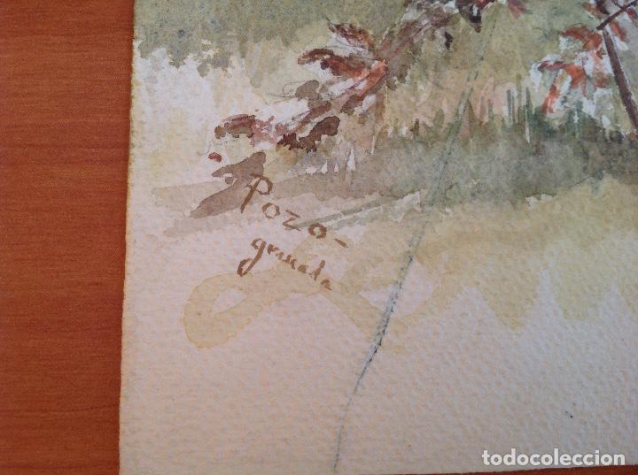 Arte: Pozo. Estudio de una planta - Foto 2 - 140554986