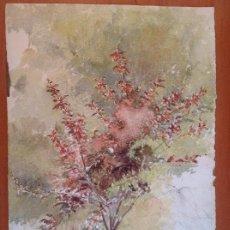Arte: POZO. ESTUDIO DE UNA PLANTA. Lote 140554986