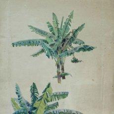 Arte: ACUARELA BOTÁNICA SOBRE PAPEL. ATRIB. JULIAN DEL POZO Y LA ORDEN. SIGLO XIX-XX.. Lote 162149782