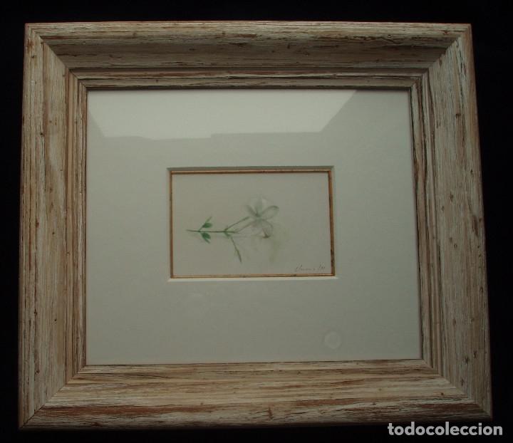 JAZMÍN. ACUARELA SOBRE PAPEL. ENMARCADA. PINTOR JOSÉ CLAROS. MURCIA. AÑO 1994. (Arte - Acuarelas - Contemporáneas siglo XX)