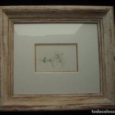 Arte: JAZMÍN. ACUARELA SOBRE PAPEL. ENMARCADA. PINTOR JOSÉ CLAROS. MURCIA. AÑO 1994.. Lote 172876095