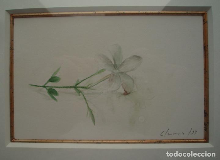 Arte: JAZMÍN. ACUARELA SOBRE PAPEL. ENMARCADA. PINTOR JOSÉ CLAROS. MURCIA. AÑO 1994. - Foto 3 - 172876095