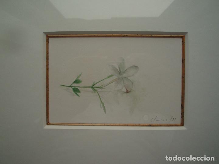 Arte: JAZMÍN. ACUARELA SOBRE PAPEL. ENMARCADA. PINTOR JOSÉ CLAROS. MURCIA. AÑO 1994. - Foto 8 - 172876095