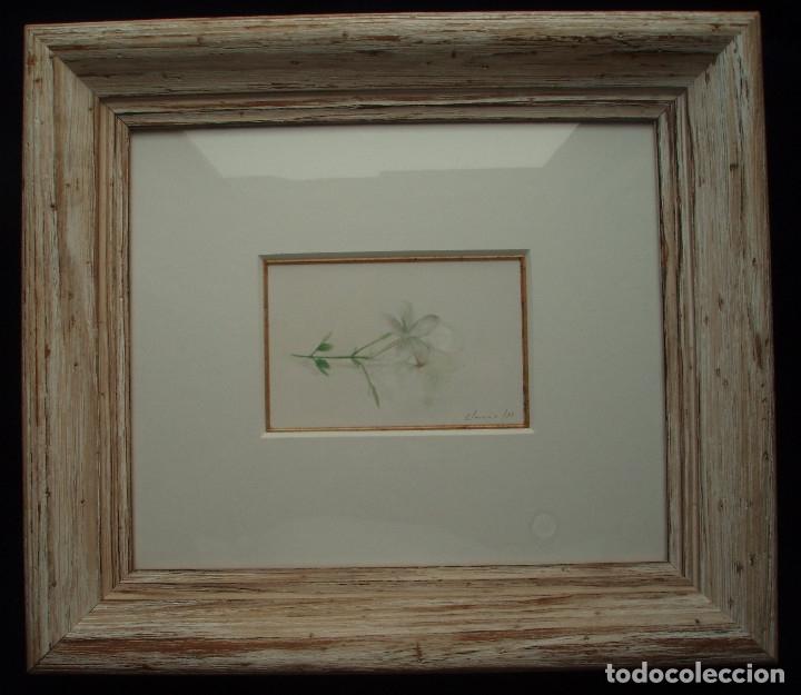 Arte: JAZMÍN. ACUARELA SOBRE PAPEL. ENMARCADA. PINTOR JOSÉ CLAROS. MURCIA. AÑO 1994. - Foto 9 - 172876095