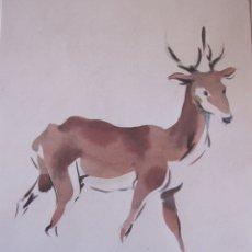 Arte: GUILLEM FRESQUET. CIERVO. ACUARELA. 24 X 17 CM.FIRMADA. Lote 173964888