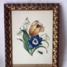 Arte: ANTIGUA ACUARELA , ORIGINAL SIGLO XIX ,FIRMADA EN 1832 - FLORES Y COLEOPTERO . Lote 177947633