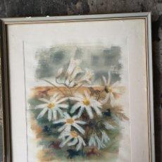 Arte: PHOEBE ERICKSON (1907-2006) MARGARITAS. MEDIDAS CON MARCO 52X43CM. Lote 180014916