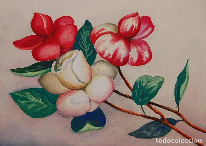 Arte: ORIGINALES 1930s - COLECCIÓN DE ACUARELAS (7): FLORES - Foto 15 - 183387978