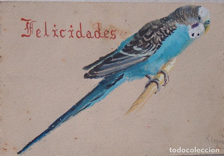 PERIQUITO PINTADO EN ACUARELA, FELICIDADES (Arte - Acuarelas - Contemporáneas siglo XX)