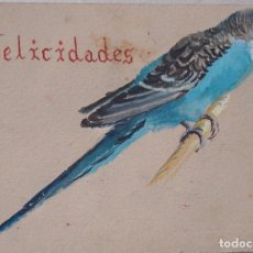 Arte: PERIQUITO PINTADO EN ACUARELA, FELICIDADES. Lote 194541318