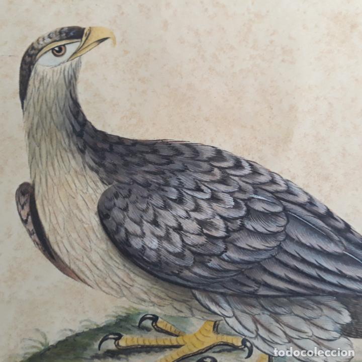 Arte: acuarela naturalista finales del xviii - Foto 2 - 197582060
