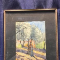 Arte: ACUARELA SOBRE PAPEL 1920 ARBOLES OLIVOS OLIVAR VILLAVICIOSA 20 FIRMA J. VALENTIN 40,5X33,5CMS. Lote 200117881