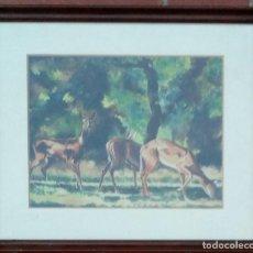 Arte: CARLOS DOMINGUEZ BECQUER- CIERVOS EN EL BOSQUE-. Lote 209716235