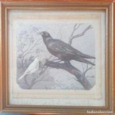 Arte: E. VICENTE- AVES-. Lote 209839427