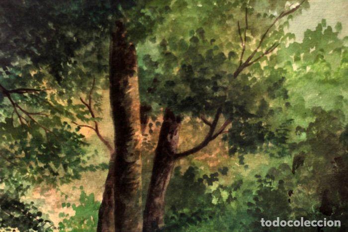 Arte: Vicente Melió Alfonso - Cervatillos en el bosque- Acuarelas - Firmado a mano - 76x63 enmarcado - Foto 5 - 218681750
