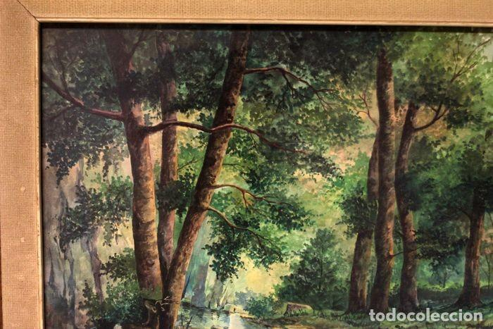 Arte: Vicente Melió Alfonso - Cervatillos en el bosque- Acuarelas - Firmado a mano - 76x63 enmarcado - Foto 7 - 218681750