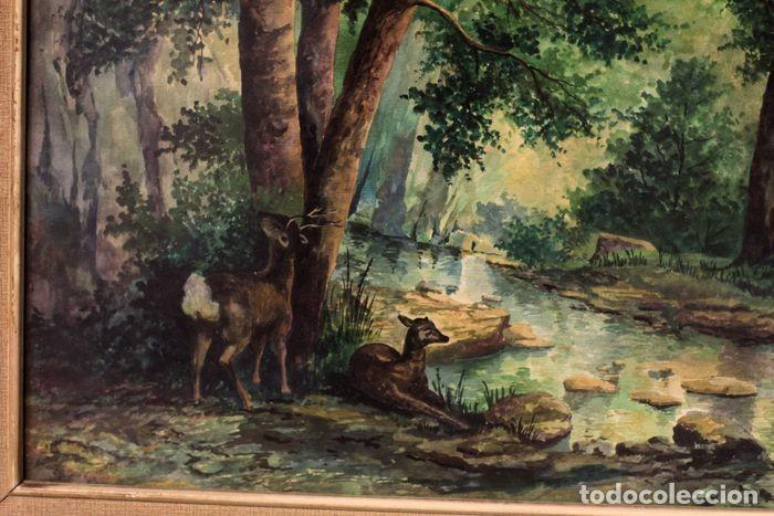 Arte: Vicente Melió Alfonso - Cervatillos en el bosque- Acuarelas - Firmado a mano - 76x63 enmarcado - Foto 8 - 218681750