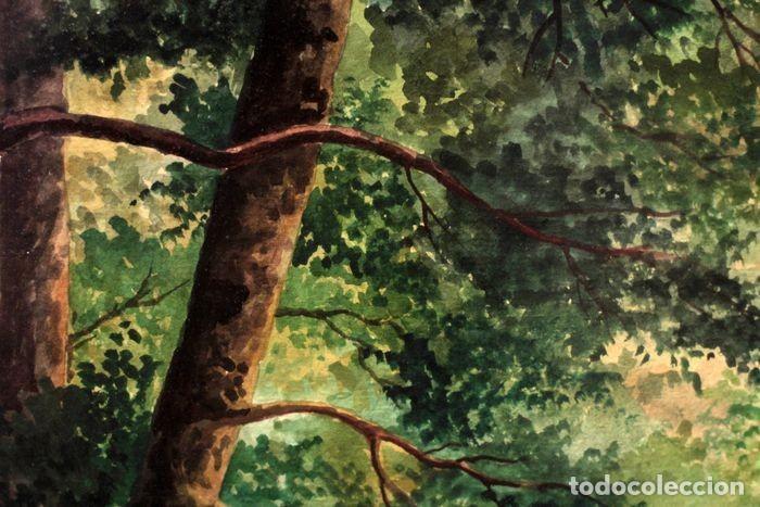 Arte: Vicente Melió Alfonso - Cervatillos en el bosque- Acuarelas - Firmado a mano - 76x63 enmarcado - Foto 11 - 218681750