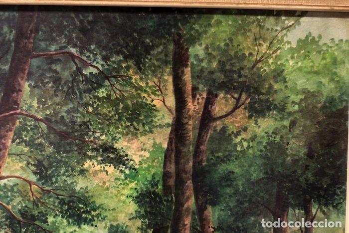 Arte: Vicente Melió Alfonso - Cervatillos en el bosque- Acuarelas - Firmado a mano - 76x63 enmarcado - Foto 13 - 218681750