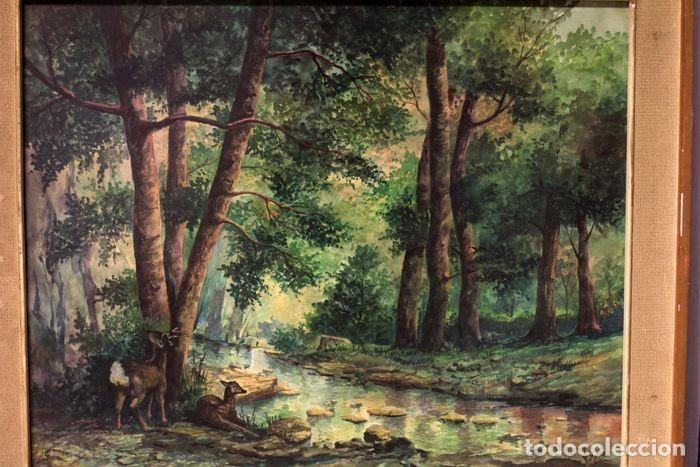 Arte: Vicente Melió Alfonso - Cervatillos en el bosque- Acuarelas - Firmado a mano - 76x63 enmarcado - Foto 15 - 218681750