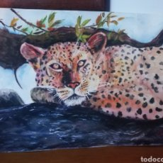 Arte: ACUARELA, GUEPARDO. Lote 224144790