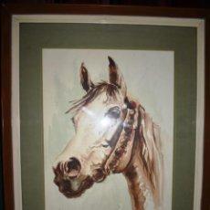 Arte: ACUARELA DE CABALLO DE ALIAGA AÑO 1957. Lote 225192600