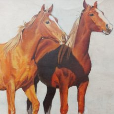 Art: DIBUJO ILUSTRACION CAVALLOS. Lote 237476985