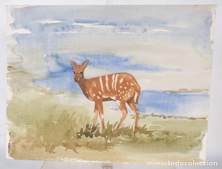 Arte: Acuarela sobre papel Ciervo firmado Joan - Foto 2 - 275537058