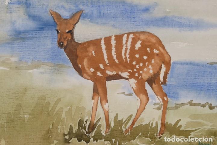 Arte: Acuarela sobre papel Ciervo firmado Joan - Foto 4 - 275537058