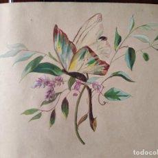 Arte: PRECIOSA ACUARELA S XIX ARBOL Y MARIPOSA. Lote 288742353