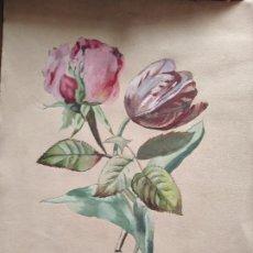Arte: PRECIOSA ACUARELA S XIX ROSAS FLORES. Lote 288742743