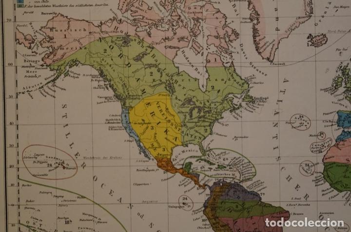 Arte: Mapa de la vegetación en el Mundo, 1866. Perthes - Foto 3 - 121855163