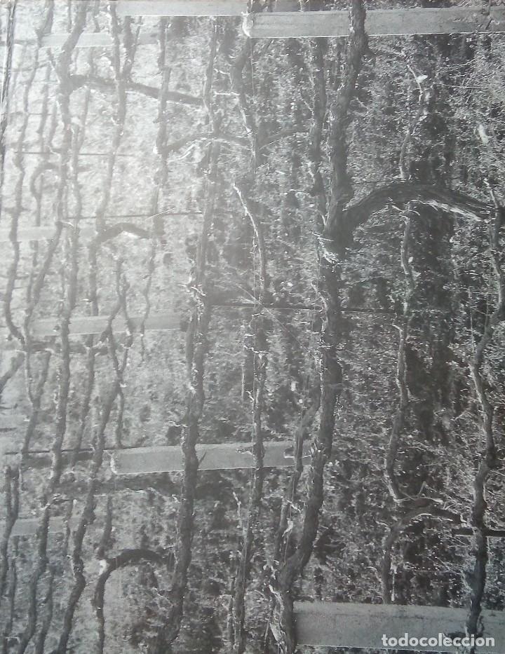 Arte: Gesto y orden. Catálogo de la exposición de Pedro Castortega, Jose Manuel Ciria y Antón Lamazares - Foto 2 - 194877672