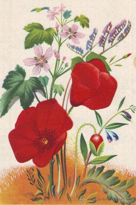 Uxg hermosa cromolitografia griega de flores 19 comprar for Enmarcar fotos online