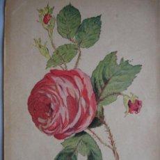 Arte: ROSA DE CIEN HOJAS.FLORES.BOTANICA.AÑO 1870.17X11. Lote 43857039