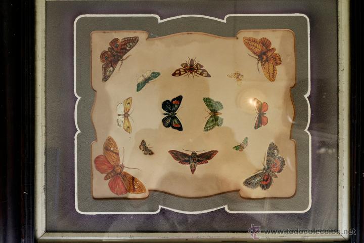 Arte: Antiguas calcomanías de mariposas de los años 20 enmarcadas con passpartout original. - Foto 2 - 57450211