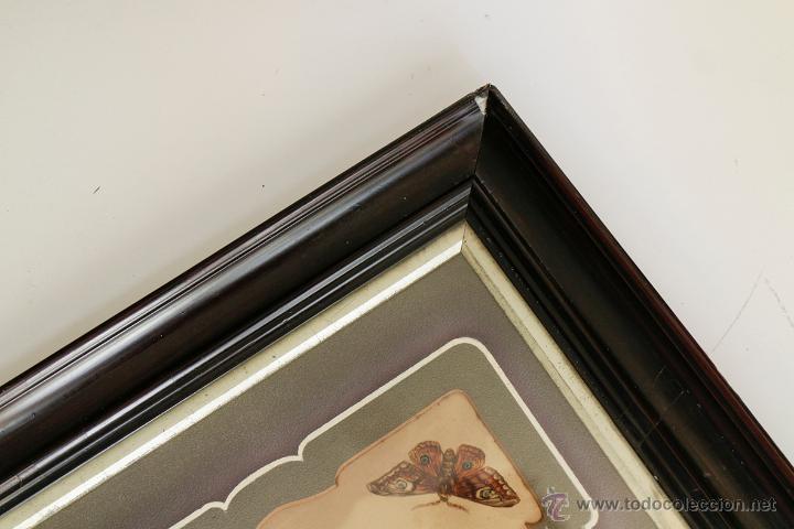 Arte: Antiguas calcomanías de mariposas de los años 20 enmarcadas con passpartout original. - Foto 3 - 57450211