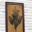Arte: CROMOLITOGRAFIA ANTIGUA ENMARCADA - PPOS. SIGLO XX.. Lote 58623019