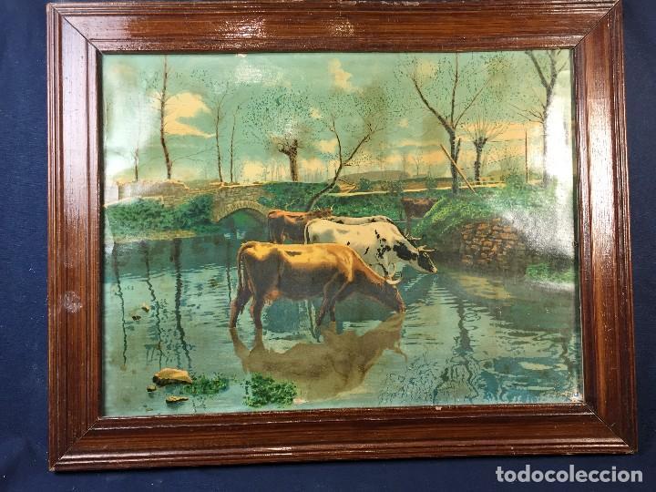 Arte: cromolitografia enmarcada vacas en el rio norte europa ppios s XX 38x47,5cms - Foto 2 - 73826783