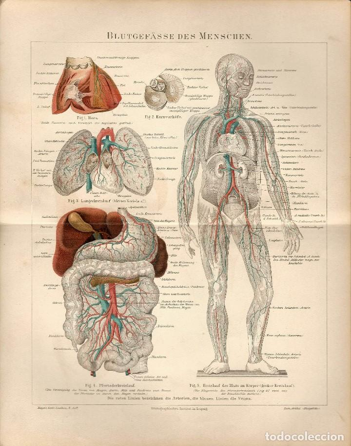 cromolitografía original siglo xix medicina ana - Comprar ...