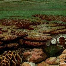 Arte: ARRECIFE DE CORAL FONDO MARINO ANIMALES COLONIALES REPRESENTACIÓN BIOLOGÍA MARINA ZOOLOGÍA. Lote 124391242