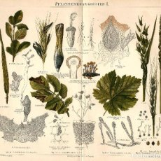 Arte: ENFERMEDADES DE LAS PLANTAS PLAGAS FORESTALES BOTÁNICA CIENCIAS NATURALES CROMOLITOGRAFÍA ORIGINAL. Lote 143541029
