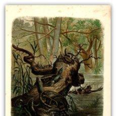 Arte: TORTUGAS EN SU HABITAT ANFIBIOS FAUNA ZOOLOGIA CROMOLITOGRAFIA ORIGINAL SIGLO XIX. Lote 115695275